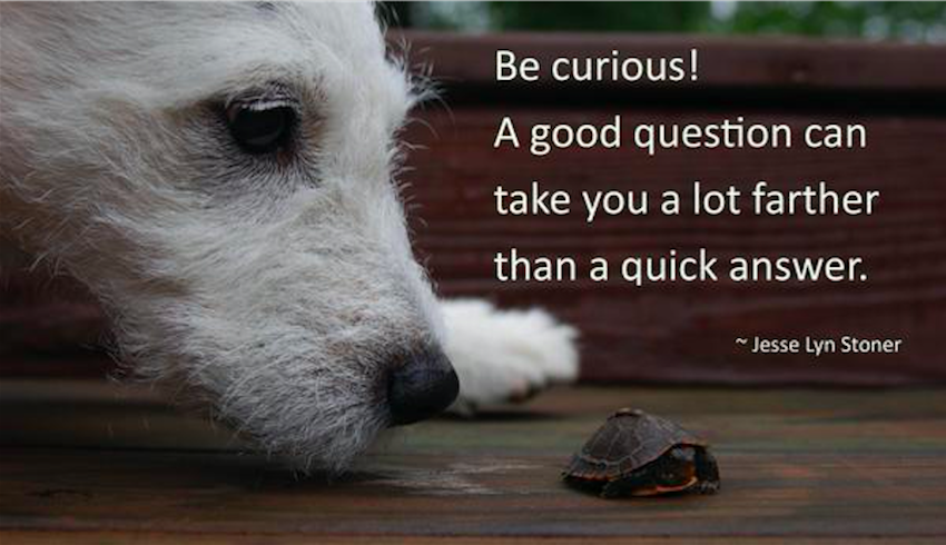 successful leaders are intensely curious